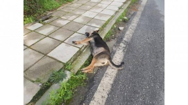 Σωστή διαχείριση νεκρών ζώων σε δημόσιες οδούς και αυτοκινητόδρομους